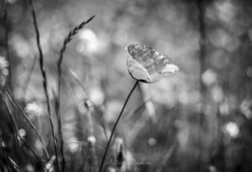 © ARfoto
